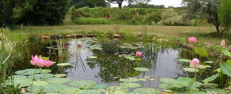 Visiter les jardins et serres des membres de plantes web for Jardin aquatique