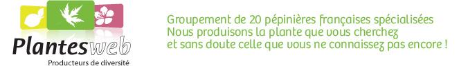 Groupement de 20 pépinières françaises spécialiséesNous produisons la plante que vous cherchez et sans doute celle que vous ne connaissez pas encore !